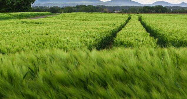 纳米技术和人工智能可能是解决全球粮食安全挑战的关键