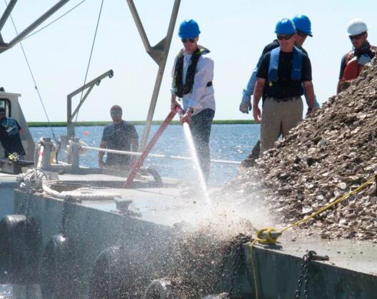 牡蛎壳有助于重建海岸线