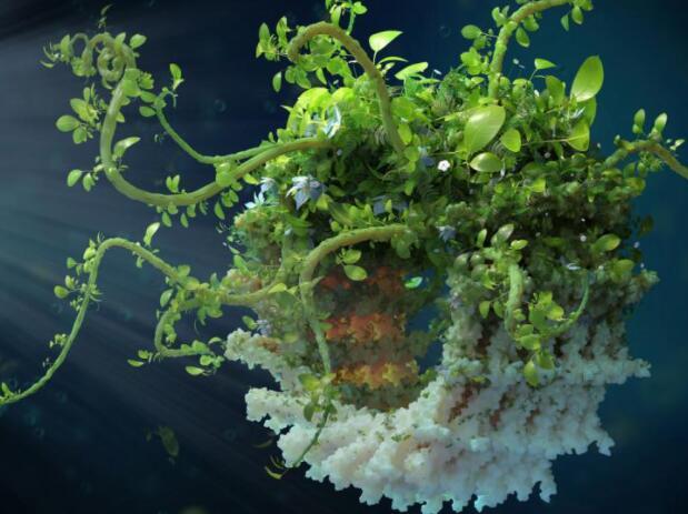 植物如何增强其捕光膜以抵御环境压力