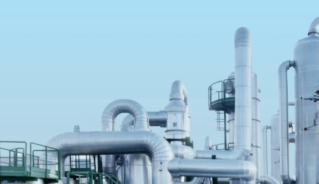盐沼植物可能标志着碳捕获能力