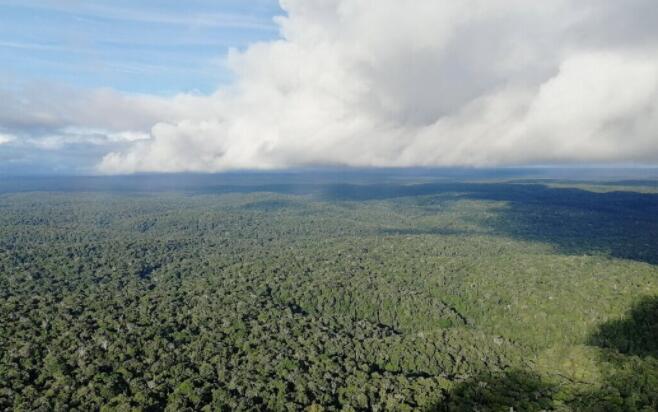 不受控制的气候变化将导致亚马逊森林严重干燥