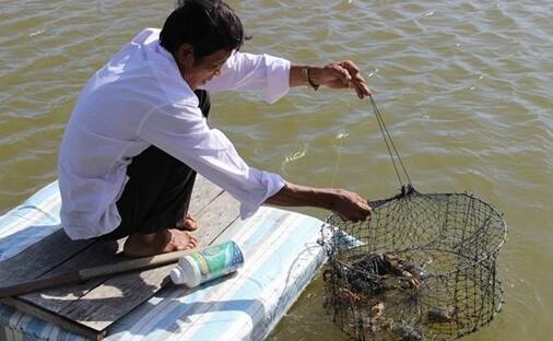 金瓯省采取行动更好地保护水产养殖环境