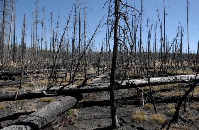 气候变化和火灾如何塑造未来的森林