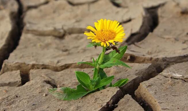 研究人员设计了一种方法来保护种子在关键的发芽阶段免受缺水压力