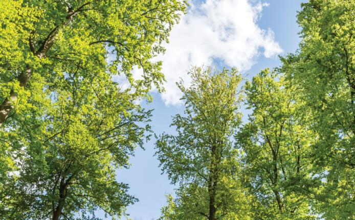 研究表明城市地区的个别树木在晚上提供凉爽