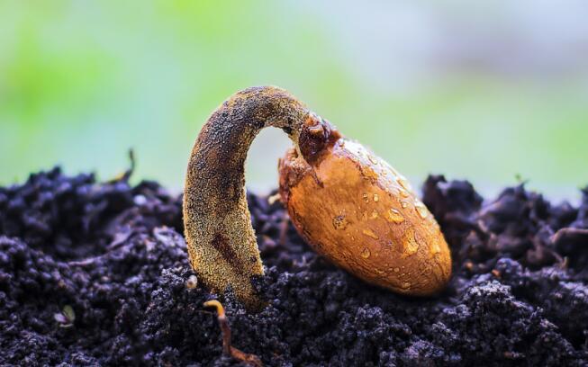 种子如何知道这是发芽的好时机