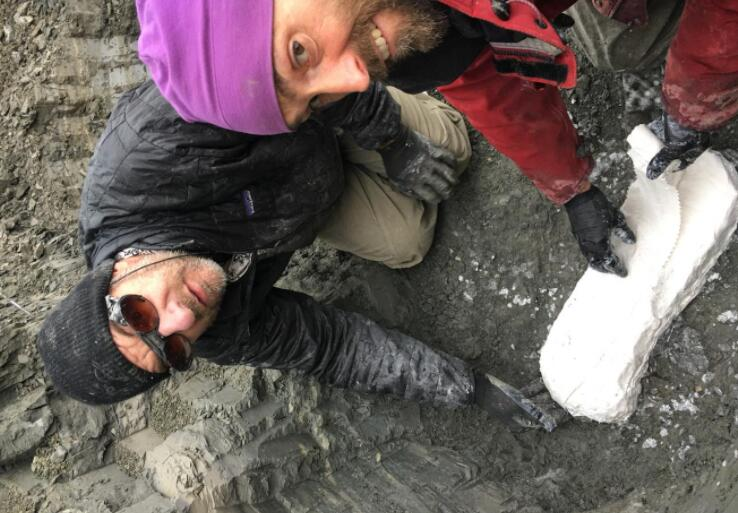 研究小组发现北极恐龙苗圃