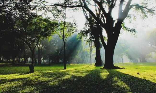 研究发现城市绿地影响市民幸福感
