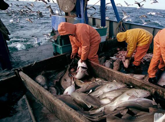 简单的种群评估方法显示加拿大东部的高鳕鱼捕获量可能会持续数十年