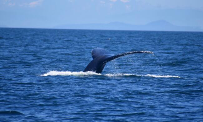 保护公海生物多样性所需的移动保护区