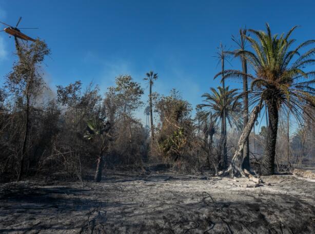 近40%的植物物种非常稀有 容易受到气候变化的影响