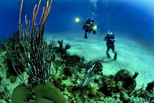 变暖海洋中珊瑚的新危险:金属污染