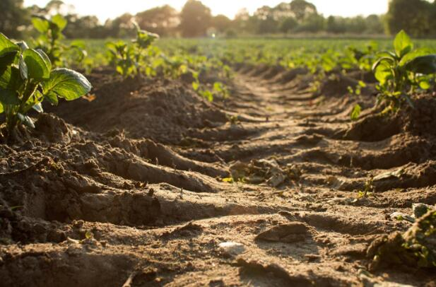 为科学家和政策制定者在土壤碳和气候变化方面寻找共同点