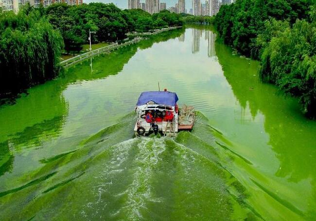 研究人员审查导致有害藻类大量繁殖的环境条件