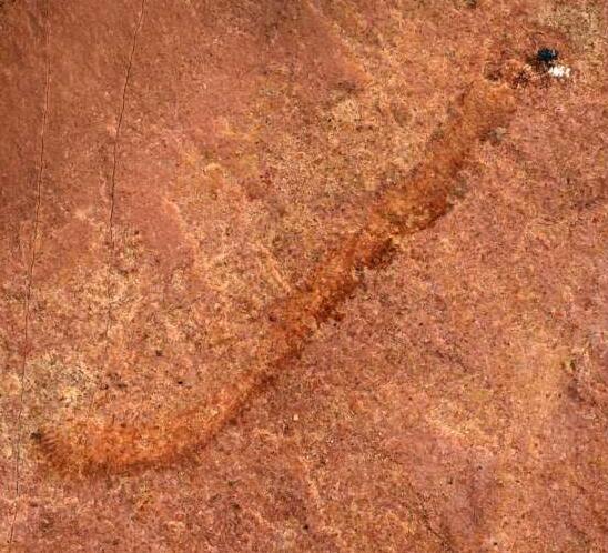 5亿年前的化石代表北美罕见的古代动物发现