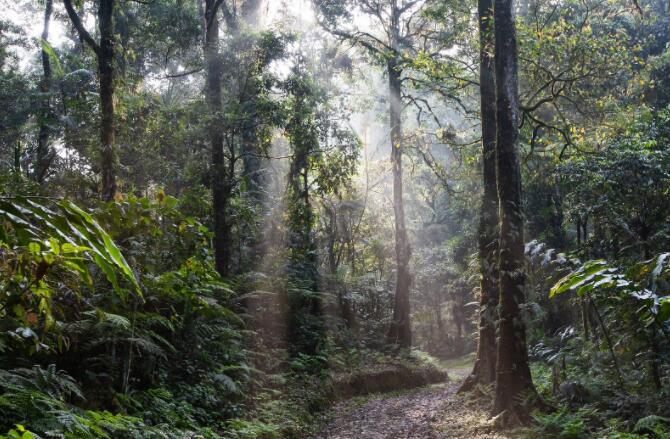 热带森林边缘增加碳排放