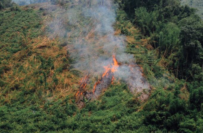 森林火灾与数以万计可避免的死亡有关