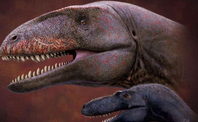 乌兹别克斯坦化石揭示了新的顶级恐龙