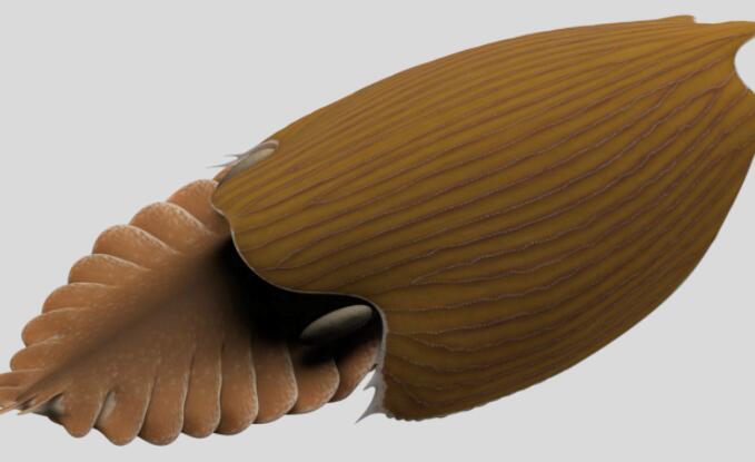 在50亿年前的伯吉斯页岩中发现了大量新的动物物种