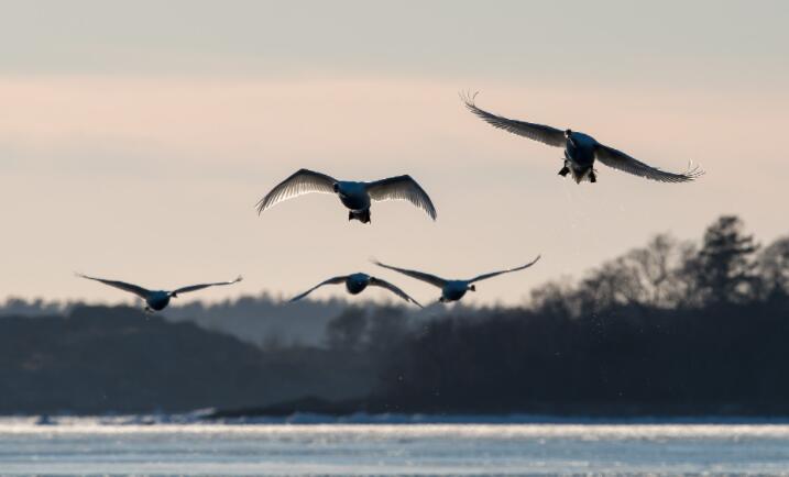 陆地鸟类如何穿越开阔的海洋