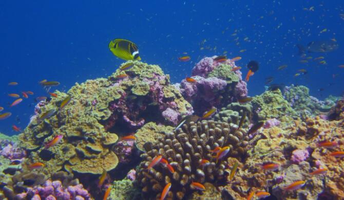 一些珊瑚礁正在跟上海洋变暖的步伐