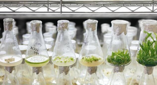 从生物技术到生物生态学