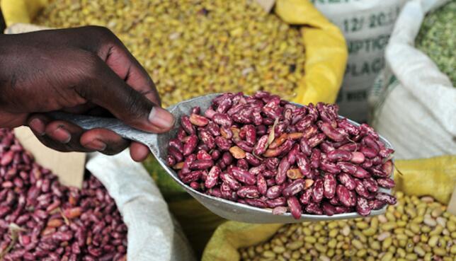 当前局势引领非洲农业创新