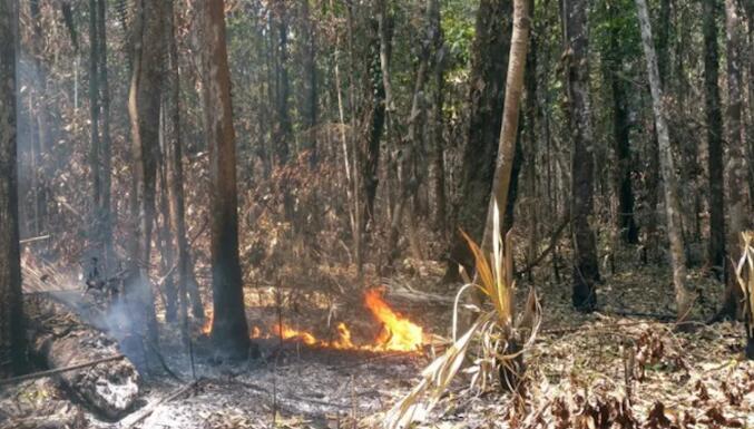 亚马逊潮湿地区的火灾在长达三年的时间内摧毁了27%的树木