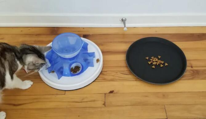 猫更喜欢免费用餐而不是为它们工作