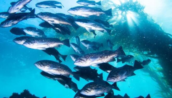 成群结队的鸟类、群鱼和其他集体活动可以稳定生态系统