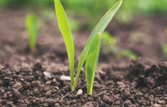 新的以色列研究显示了清洁土壤的有效且环保的方法