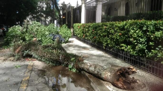 由于管理不善 圣保罗市旱季树木倒下