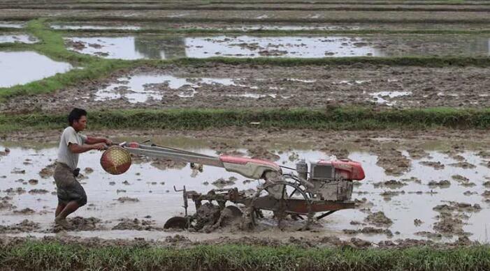 缅甸:若开邦农民努力重新种植受洪水破坏的稻田
