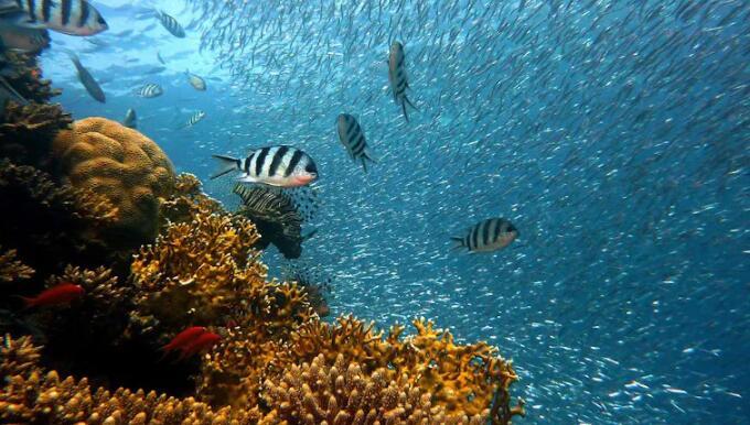 更有效地保护珊瑚礁免受气候变化的影响