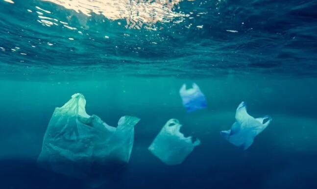 微塑料问题的海洋:长期摄入会损害鱼类的生长和繁殖