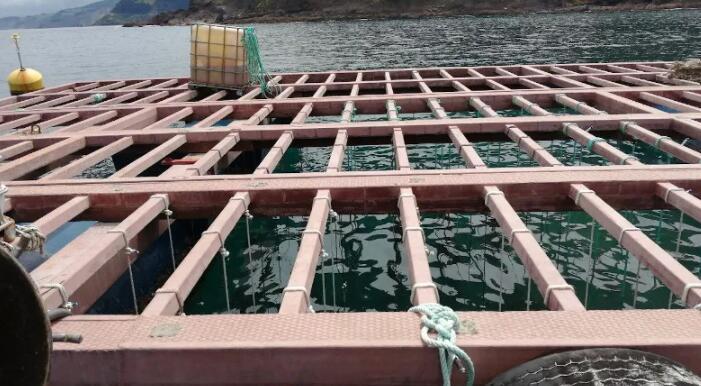 Biogears最终原型开发和海上试验开始